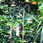 the bird-feeding station in the garden, next to the pool area
