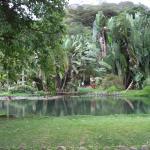 Botanical Garden (Jardim Botanico)