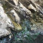 Hot Sulphur Springs Resort & Spa