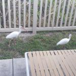 One of our 3 patios, these visitors were just passing through.