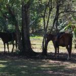 Foto de Franklin's Horseback Riding