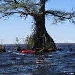 By one of the big Cypress trees