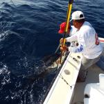 Star Fleet Sportfishing Foto