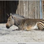 Foto de Zoo Landau