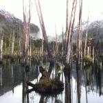Parque Tagua Tagua