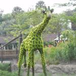 Serengeti Night Safari at Busch Gardens Foto