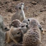 Photo of Serengeti Night Safari at Busch Gardens