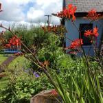 Bellatrix garden
