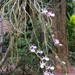 orchidée dans le jardin du Tonnam