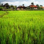 Photo de Angkor Rural Boutique Resort