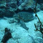 Turtle Chillin
