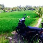 Bilde fra Ubud Sari Health Resort