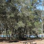 Foto de Gold Head Branch State Park