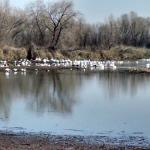 Colusa National Wildlife Refuge照片