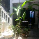 Photo of Traveller's Tree