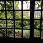 View of the garden thru the window