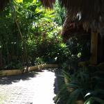 Фотография Hotel Guarana