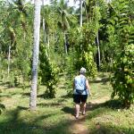 Walking among the Coconut Palms and Peppers