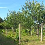 Il Palasso in Cima alla Serra - Tuscany Country House의 사진