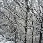 A small snow flurry