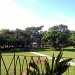 The nice yard