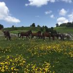 Beka Ferda Ranch