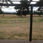 Brackenridge Country Retreat Photo