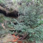 """The """"Fonte dell'acqua gassata"""" (source of carbonated water)"""