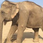 TLC while recuperating: one of the centre's beautiful patients