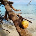 Photo de Winnifred Beach