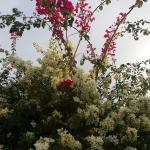 Foto van Pousada Mandala