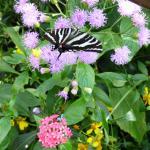 Butterfly Rainforest Gainesville Florida