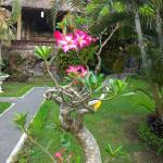 Photo of Terang Bulan Cottages