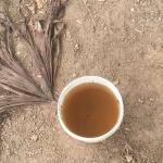 The dirty water my guide used to brew my Ayahuasca.