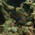 Foto de Oceanic Divecenter
