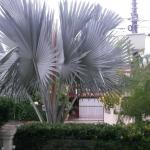 Photo of Hotel Hola