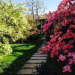 Primavera- Spring