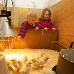 Our petting area means you can let little ones meet our chicks & rabbits. Please make sure you r