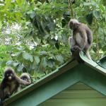 Monkeys on the roof:)