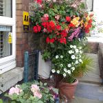 Chippenham in  Bloom
