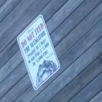 Blow-Fly posting of Alligators