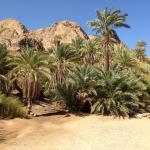وادى جنى is a very breathtaking place found in Dahab full of palm trees and rainfall water