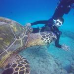 Oahu Diving Foto