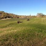 Typical Sun Ridge wildlife. In my ten years I have seen coyotes, bobcats, mule deer. mountain li