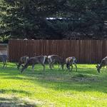 Neighborhood deer!