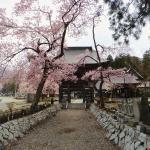 Local cherry blossoms