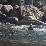Photo de Seals by Sea Tours