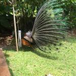 Foto de Donna's Detours - Tours of Oahu