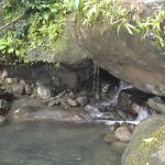 Foto de Roots Jungle Retreat
