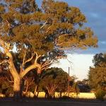 Sunset on the gumtrees from our outdoor area